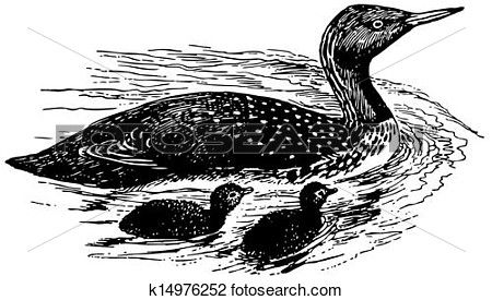 Clipart   Bird Red Throated Loon  Fotosearch   Search Clip Art
