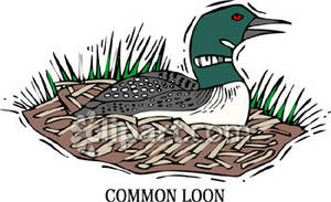 Common Loon   Royalty Free Clipart Picture