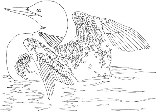 Png Loon Clip Art Md Loon Image Vector Clip Art Online Royalty Free