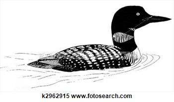 Stock Illustration Of Common Loon K2962915   Search Clipart Drawings