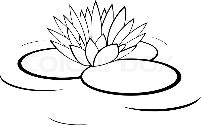 Stock Vector Of  Vector Monochrome Illustration Of Water Lily Flower