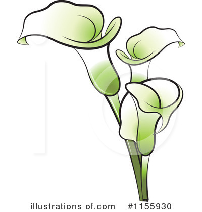 Calla Clipart  1155930 By Lal Perera   Royalty Free  Rf  Stock