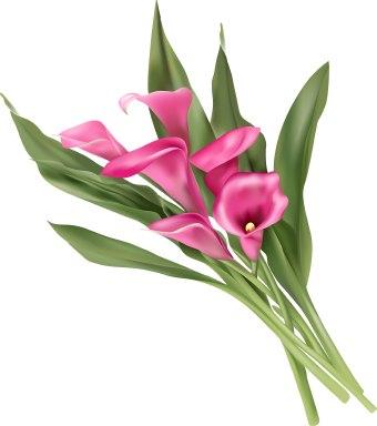 Calla Lily Flower Clip Art