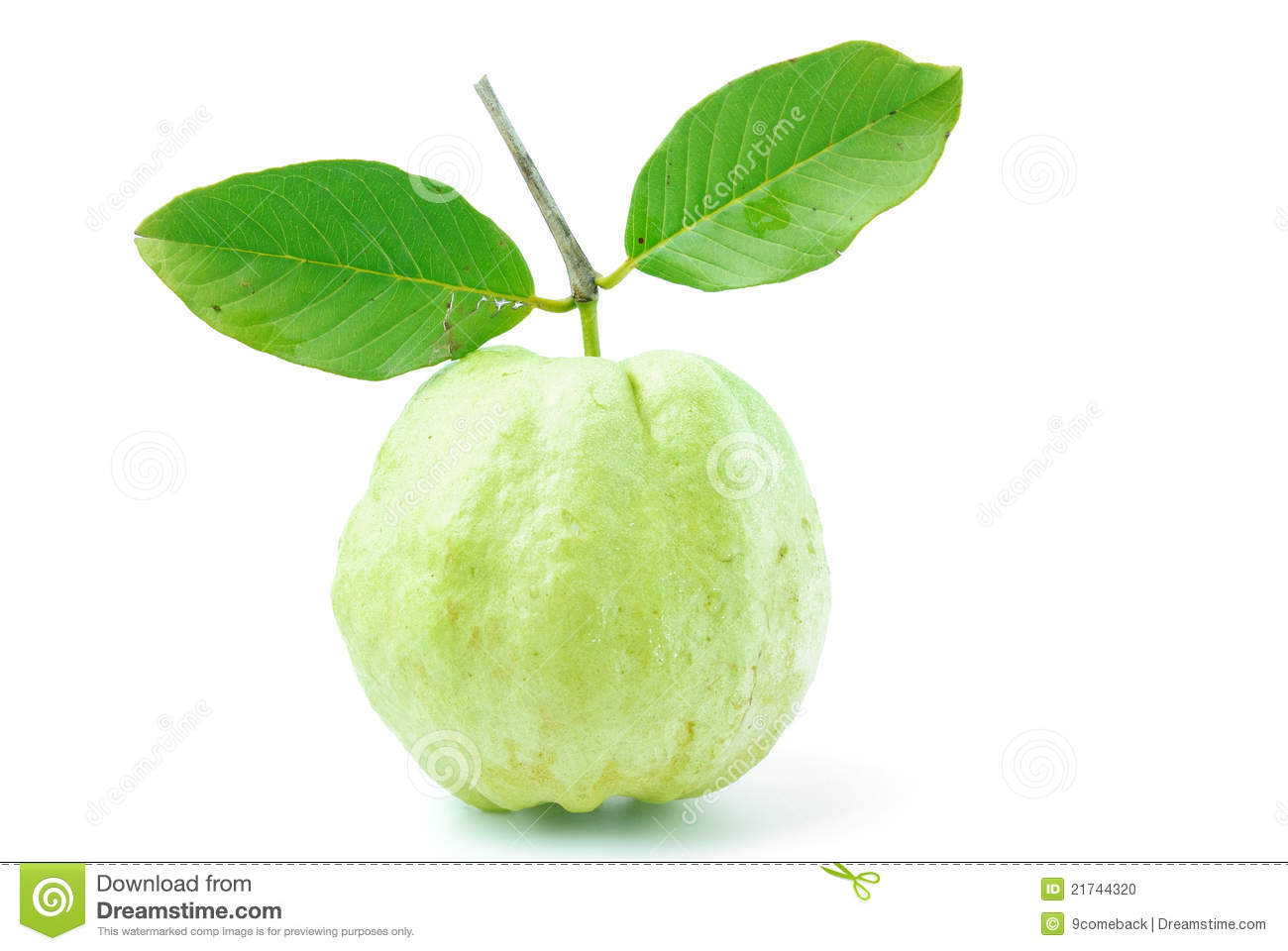 Guava Fruit Has Green Skin And White Flesh Vitamin C