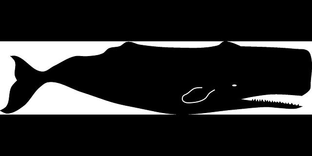 Sperm Whale Clipart   Clipart Panda   Free Clipart Images