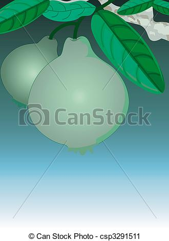 Clipart Of Guava   Illustration Of Guava In The Plant Csp3291511