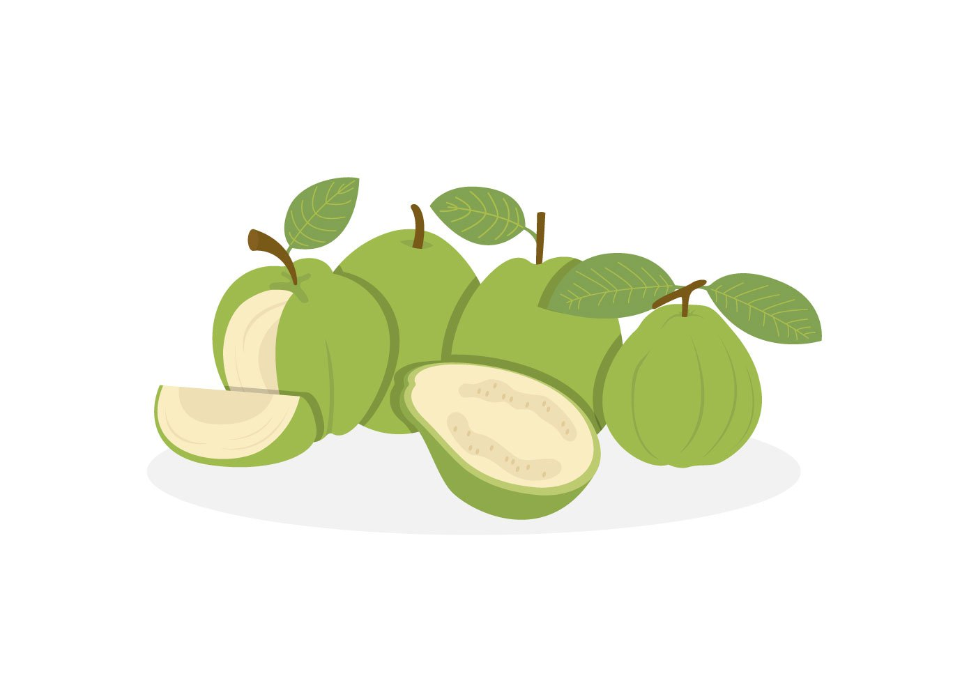 Guava Vectors   Download Free Vector Art Stock Graphics   Images