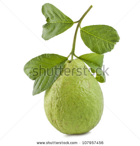Pineapple Guava Fruit Harvesting Guavas Fruits Planting Stock