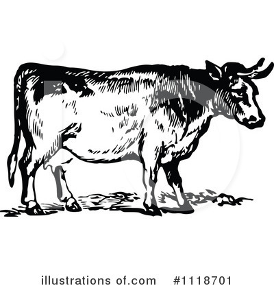 Beef Cattle Clipart Royalty Free  Rf  Cow Clipart