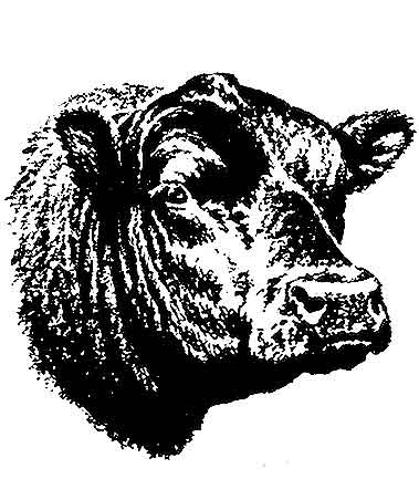 Beef Cattle Clipart Screen Savers And Clip Art