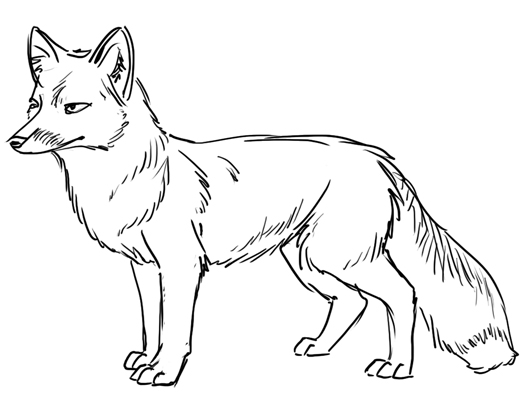Fox Outline Line Drawing Painting Kindergarten Worksheet Guide