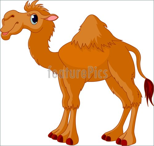 Illustration Of Camel    Illustration Of Cute Funny Camel