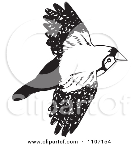 Clipart Black And White Double Bar Finch Bird Flying 2   Royalty Free