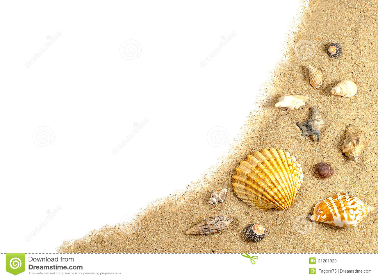 Beach Sand And Shells Stock Photo   Image  31201920