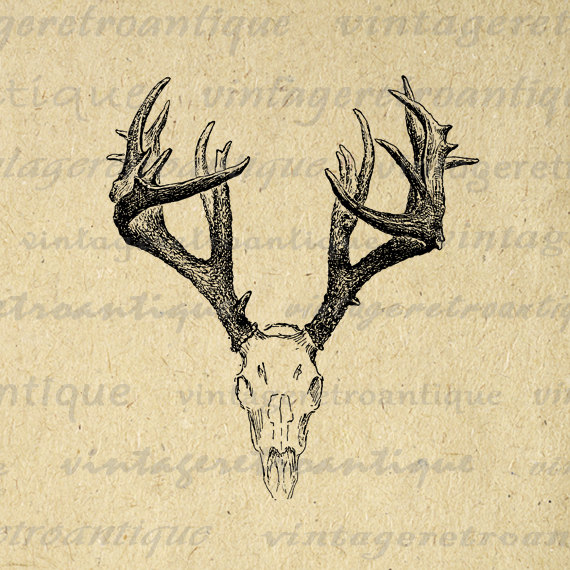 elk antlers graphic - photo #12