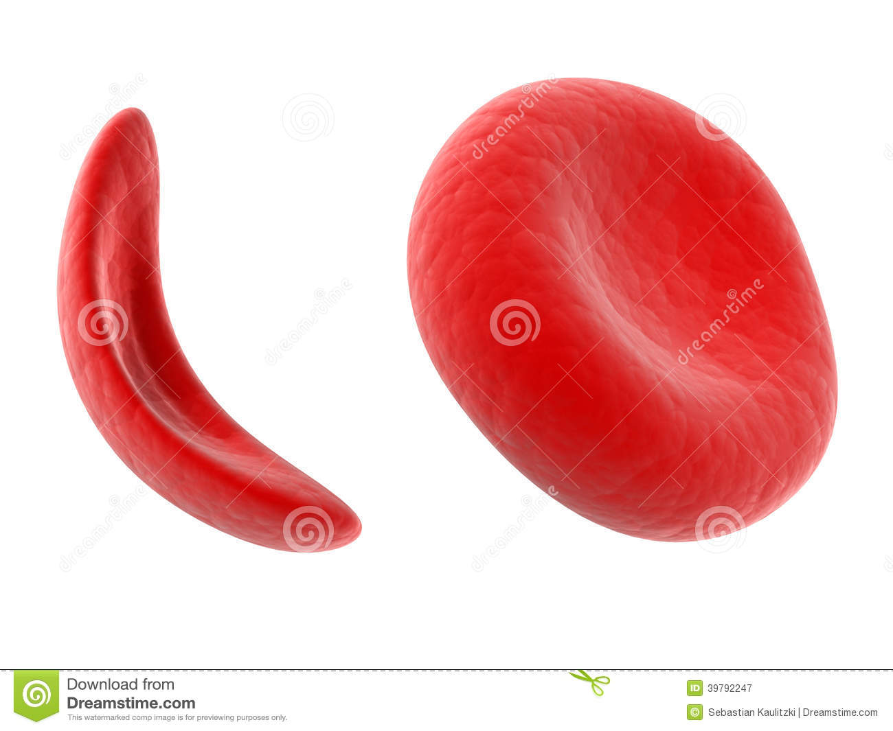 Scientific Illustration   Sickle Cell Blood Cell