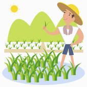 Rice Farmer Clipart - Clipart Kid