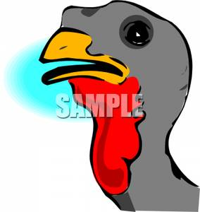 Wild Turkey Head   Royalty Free Clipart Picture