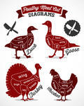 Poultry Cuts Diagram In Vintage Style Vector Chicken Cuts Diagram