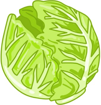 Clip Art Lettuce Clip Art lettuce clipart kid clip art of a head green or cabbage