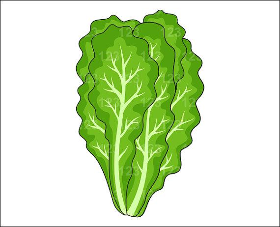 Clip Art Lettuce Clip Art lettuce clipart kid cliparts co