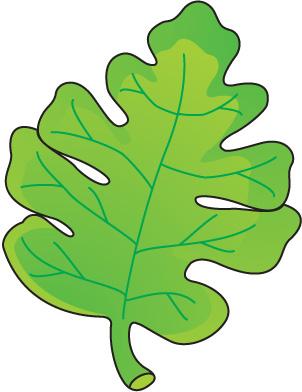 Clip Art Lettuce Clip Art clip art leaf lettuce clipart kid leaf8 jpg