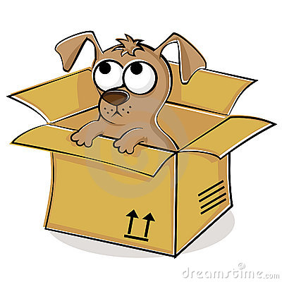 Nice Puppy In Box Royalty Free Stock Photos   Image  20237258
