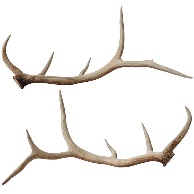 Moose Antler Clipart Clipart Suggest