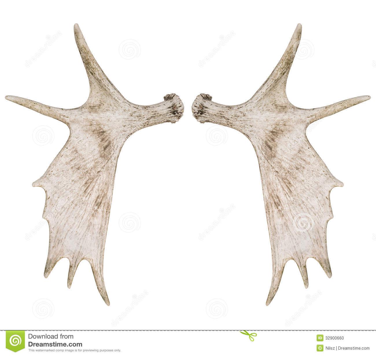 Elk antlers clipart
