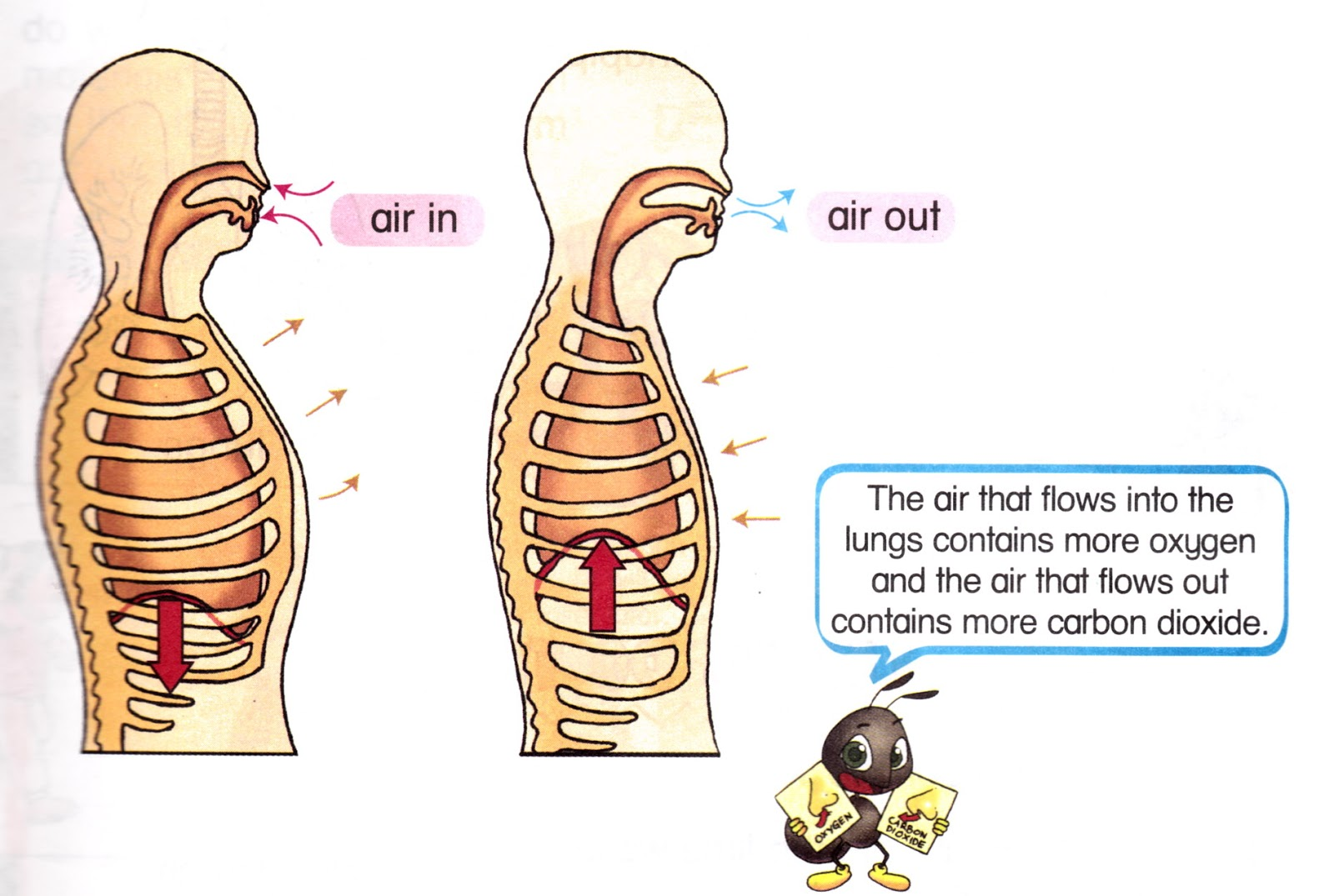 Person Breathing Clipart Breathing Clipart Person Svhshf Clipart on Diagram Of Line Dance