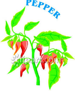 Hot Red Pepper Plant   Royalty Free Clipart Picture