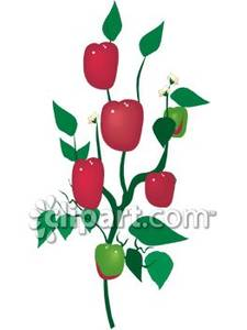 Red Bell Pepper Plant   Royalty Free Clipart Picture
