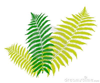 Clip Art Fern Clipart fern clipart kid leaf 6288775 jpg