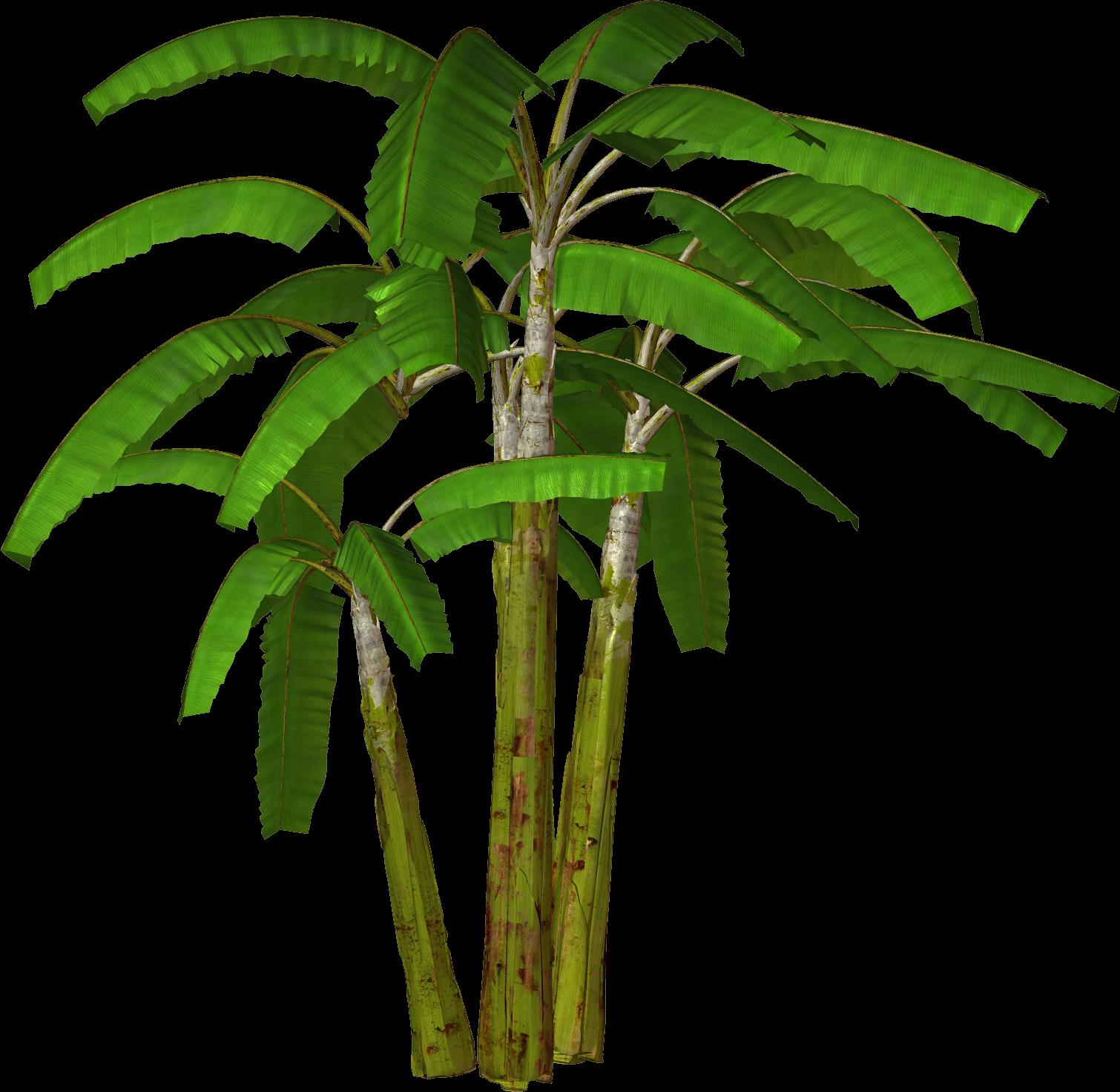Rainforest Flower Clip...