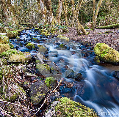 Flowing Stream With Mossy Rocks Royalty Free Stock Images   Image