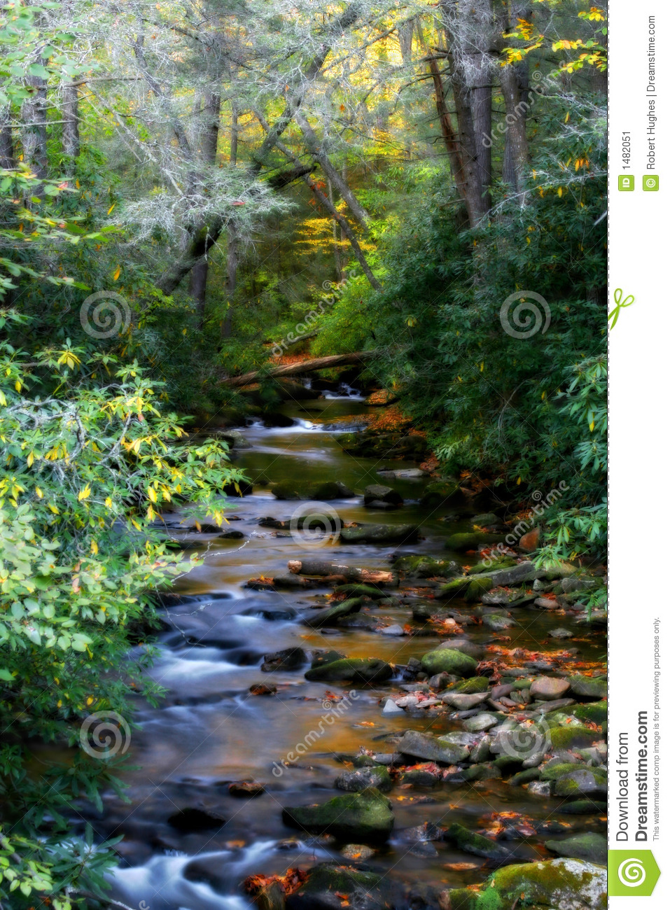 Mountain Stream Near Sliding Rock In Pisgah National Forest  Fall