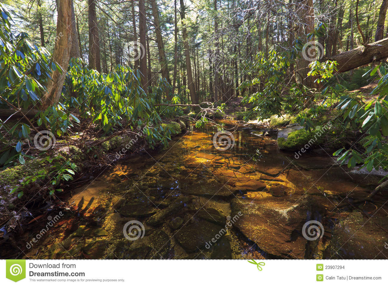 Tannin Colored Mountain Stream And Rocks In Early Spring On A Sunny