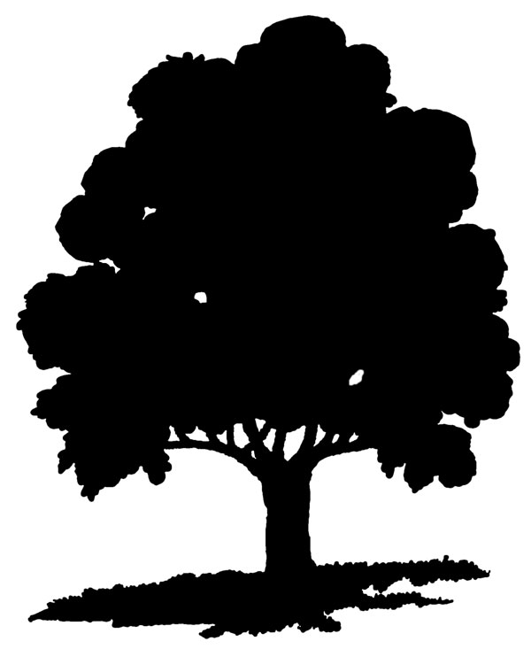 Clipart Oak Trees Black And White   Clipart Panda   Free Clipart