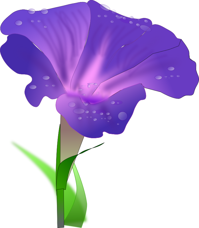 Morning Glory By Netalloy   Morning Glory Is A Common Name For Over