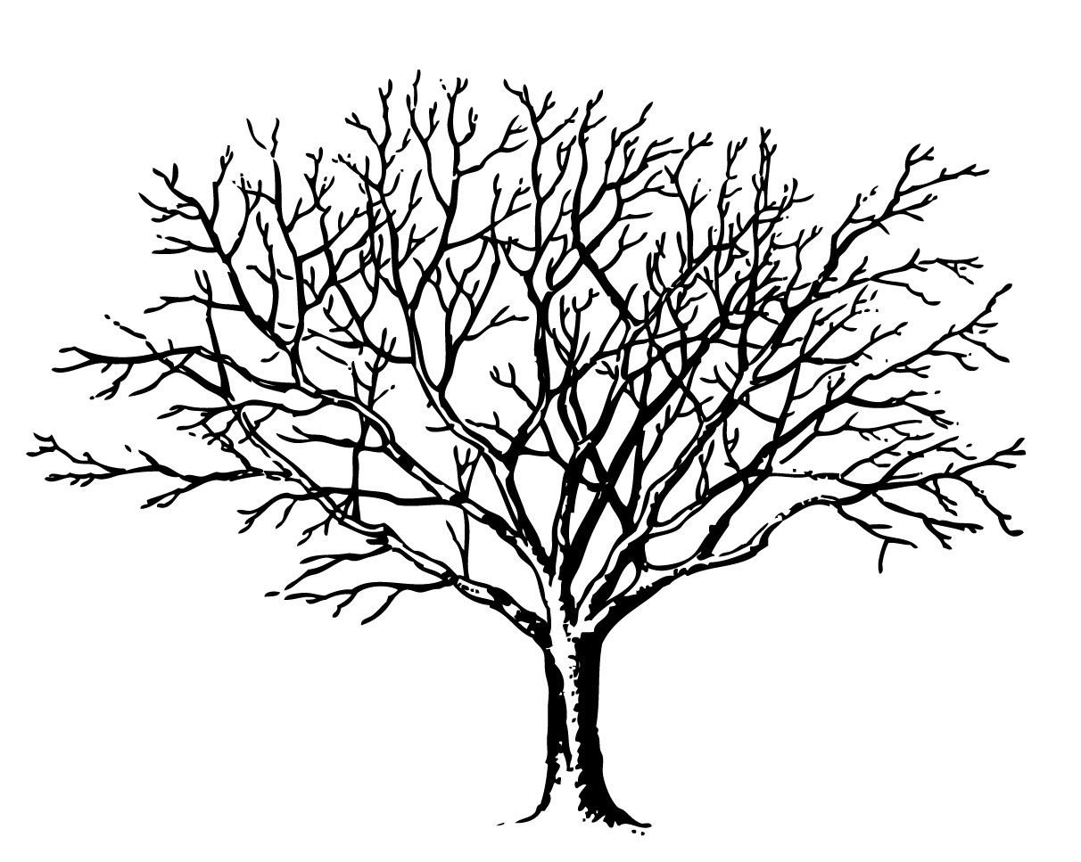 Images For   Simple Tree Without Leaves Clipart   Cliparts Co