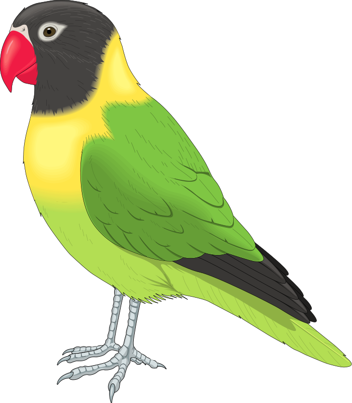 Bird Clip Art Royalty Free Animal Images   Animal Clipart Org