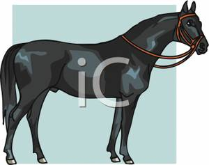 Black Horse With A Bridle   Royalty Free Clipart Picture