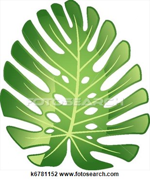 Clip Art Of Leaf Tropical Plant   Monstera  K6781152   Search Clipart