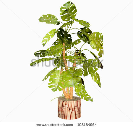 Tropical Philodendron Plant In 3d Stock Photo 108184964   Shutterstock