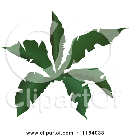Tropical Plant Clip Art Tropical Plant   Clipart
