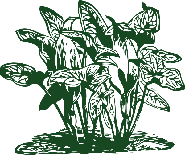 Tropical Plants Clip Art At Clker Com   Vector Clip Art Online