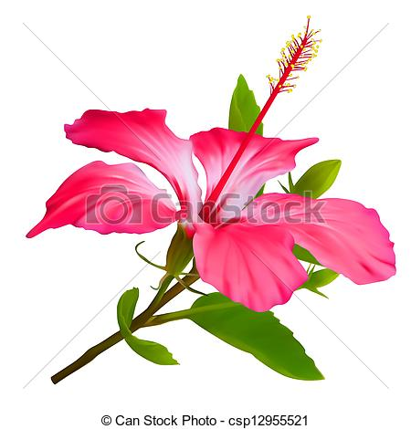 Vector   Flower Hibiscus  Hawaiian Aloha Tropical Plant   Stock