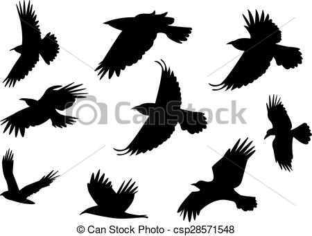 Vector   Set Of Silhouette Flying Raven Bird With No Leg    Stock