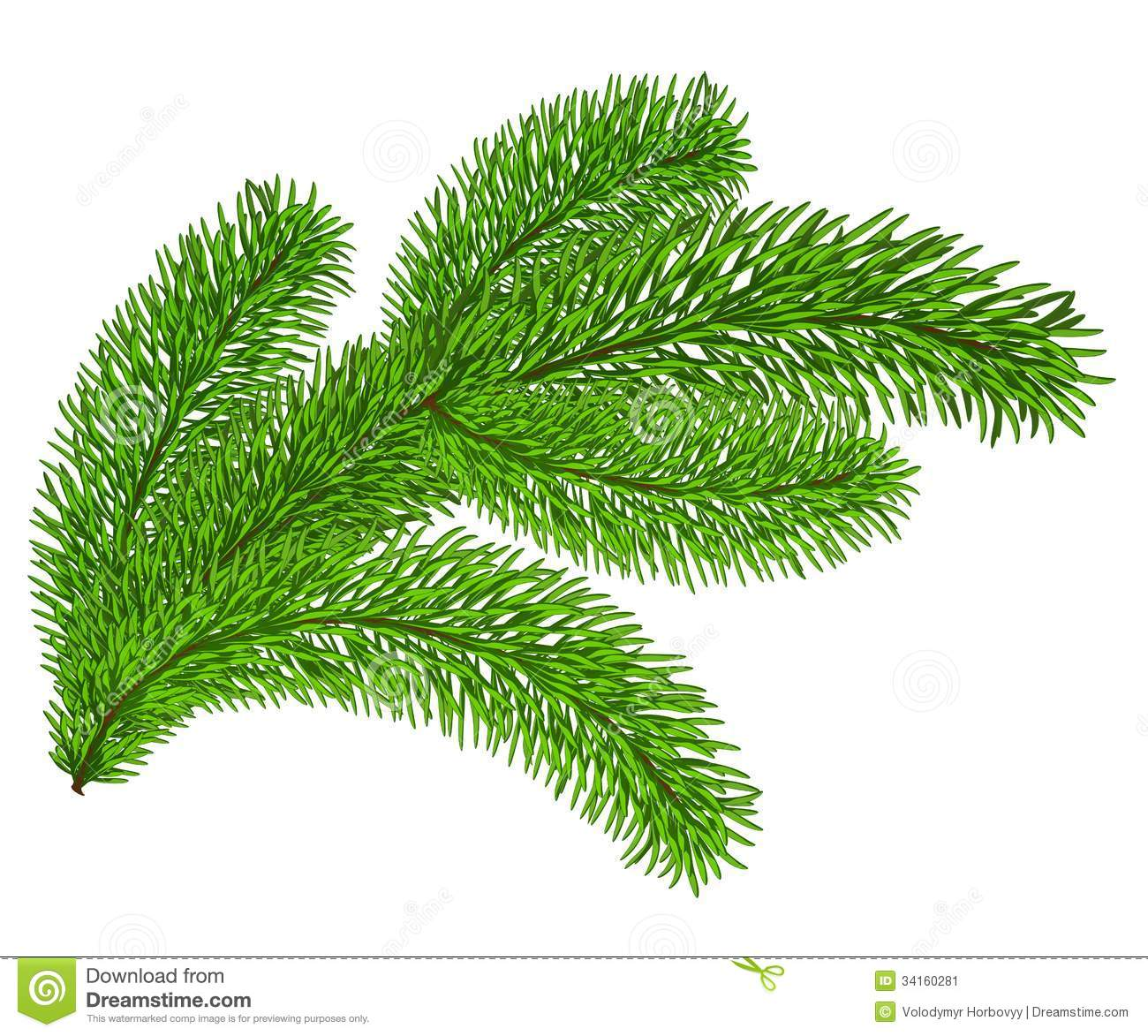evergreen bough clipart clipart suggest