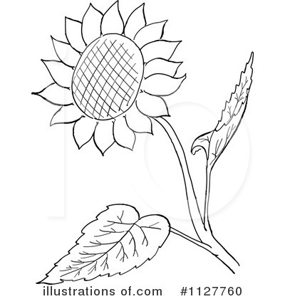 Sunflower Clipart  1127760   Illustration By Picsburg